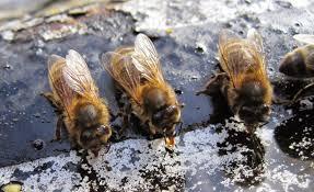 strathcona beekeepers the beekeepers u0027 library