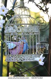birdcage garden stock images royalty free images vectors