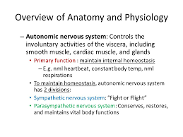 Ans Anatomy And Physiology Central Nervous System And Peripheral Nervous System Ppt Download