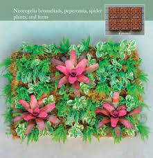 wall planter bromeliads peperomia spider plants ferns