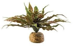 amazon com exo terra star cactus terrarium plant pet habitat