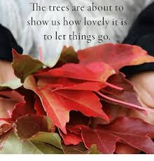 the trees are about to show us how lovely it is to let things go