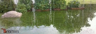 download yard flooding drainage garden design