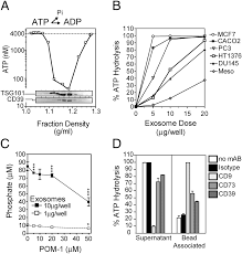 cancer exosomes express cd39 and cd73 which suppress t cells