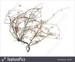 dead tumbleweed image