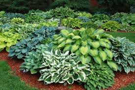 shade garden design ideas u2013 how to choose the right plants