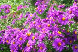 it s not work it s gardening missouri botanical garden part 4
