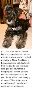 Benson Dog Meme - 25 best memes about dog biscuit dog biscuit memes