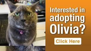 olivia aspca