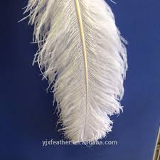 white ostrich feather centerpieces south africa ostrich feathers south africa ostrich feathers