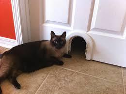 cathole cat door with brush chewy com