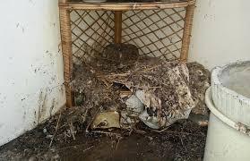 taubenabwehr balkon lasst uns tauben vergiften in der stadt zentralplus