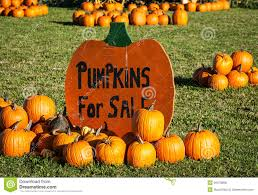 pumpkins for sale pumpkin patch stock photo image of agriculture farm 36478808