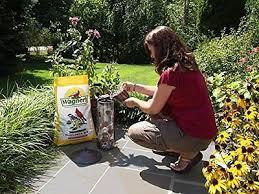 black oil sunflower seeds for birds bulk feed extra clean u0026 thin