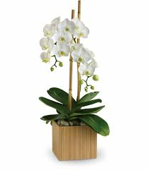 houston flower delivery beautiful orchid flower delivery in houston tx by enchanted florist