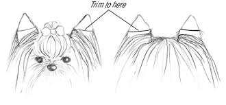 yorkie hair cut chart how to groom a yorkshire terrier dummies