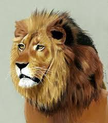 lions drawings color drawing lion aslan animal series 3
