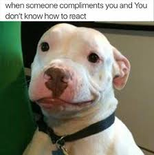 Funny Dog Face Meme - 413 best funnies images on pinterest funny animals funny stuff