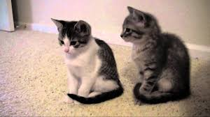 8 week old kittens and update stuff youtube