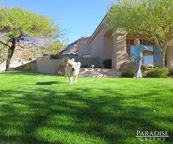 artificial turf for pets in scottsdale arizona