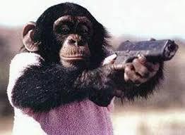 Chimp Meme - crazy chimp monkey animal humour and animal