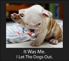 Who Let The Dogs Out Meme - it was me i let the dogs out
