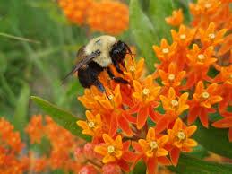native plants wisconsin 2015 field season preview