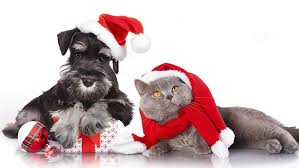 holiday gift ideas for your pets petpartners inc