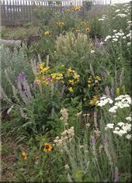 wildflower seed mixes wild flower seeds u0026 plants wild about