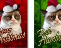 cat christmas cards a range of delightful xmas cards featuring