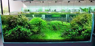 Aquascape Inspiration Choosing The Right Fish For Aquascape Nature Style Aquascaper