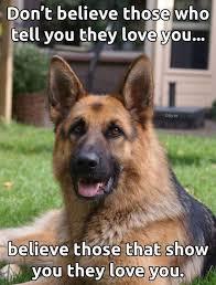 australian shepherd quotes 323 best dog breeds german shepherd images on pinterest animals