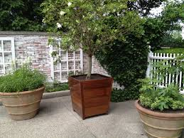 green container plants dirt simple