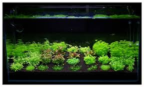 Aquascape Aquarium Plants December 2010 Aquascape Of The Month