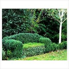 131 best topiaries for all images on pinterest topiaries