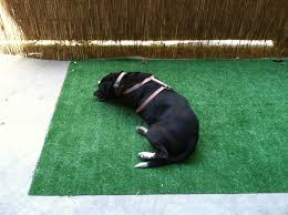 Dog Patio Fake Grass For Dogs Patio Home Design New Gallery To Fake Grass