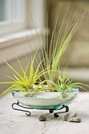 air plant dish garden gardener u0027s supply