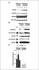 the p38 kinases mkk4 and mkk6 suppress metastatic colonization in
