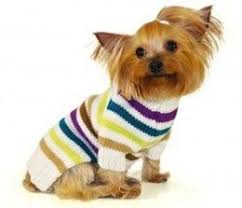 best 25 hoodies for dogs ideas on pinterest dog hoodie small