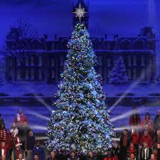 giant led christmas tree everest fir with lights u light strip on