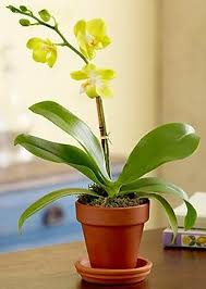 What Is An Orchid Flower - orchids care is your orchid getting enough light