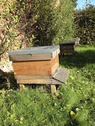 Raising Bees In Backyard by 28 Raising Bees In Backyard Bee My Neighbor West Asheville