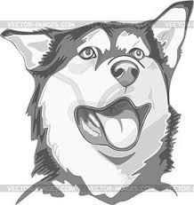 american eskimo dog vector dog vector clipart