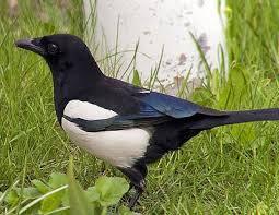 imagenes q inicien con la letra u todos los nombres de animales que empiezan por la letra u