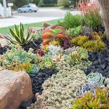 today u0027s project homemade succulent garden shallow pot cactus