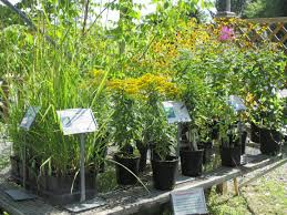 5 native plants our plants edge of the woods native plant nursery