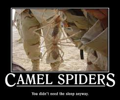 I Saw A Spider Meme - camel spiders my dad saw these a lot when he was serving in saudi