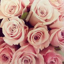 Golden Roses Of Golden Roses Bristol In My Pocket Is Now Of Golden Roses