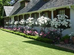 15 diy how to make your backyard awesome ideas 8 shrub roses