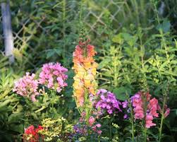 the flowers of summer at design a garden for flowers all summer great plant list the